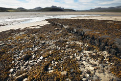 Scottish landscape with seaweed and sand. Highlands. Scotland Stock Photography