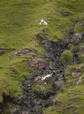 Scottish landscape with sheep in Skye isle. Quiraing. Scotland. Royalty Free Stock Photography