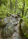 Scottish landscape with wet forest and rocks Royalty Free Stock Photo
