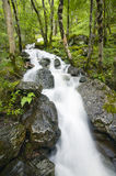 Scottish landscape with wet forest and waterfall Royalty Free Stock Images