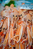 Scottish langoustines Royalty Free Stock Image