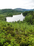 Scottish Loch in summer surrounded by green woods Royalty Free Stock Image