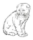 Scottish lop eared kitten drawing Royalty Free Stock Image