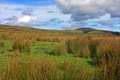 Scottish moors Stock Images