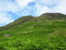 Scottish mountains covered in fern. A scenic view of the Grampian Mountains in Scotland Stock Photo