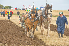 Scottish National Ploughing Championship. An image of  a pair of Clydesdale horses  pulling a vintage plough at the Scottish Ploughing Championship held at Tore Royalty Free Stock Images