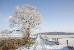 Scottish snow scene. Tree alongside farm track in snow covered Scottish landscape Royalty Free Stock Image