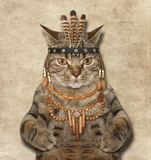 A cat is a american indian. royalty free stock photos