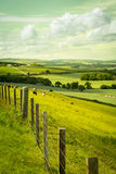 Scottish summer landscape, East Lothians, Scotland, UK