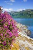 Scottish summer landscape with lake Royalty Free Stock Photos
