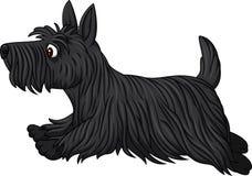 Scottish terrier dog breed running. Illustration of Scottish terrier dog breed running Royalty Free Stock Photo