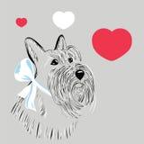 Scottish Terrier dog Royalty Free Stock Photography