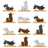 Scottish terrier dogs doing yoga. Cartoon style funny scottish terrier dogs doing yoga/concentrated  dogs / yoga poses: candle, warrior poses Stock Images
