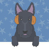 Scottish Terrier in Fur Earmuffs Stock Image