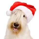 Scottish Terrier no chapéu vermelho de Santa do Natal isolado em b branco Imagens de Stock Royalty Free