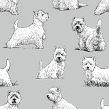 Scottish terrier pattern Royalty Free Stock Photo