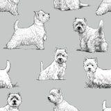 Scottish terrier pattern. Vector pattern of the white scottish terrier royalty free illustration