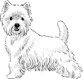 Scottish terrier sketch Royalty Free Stock Photos