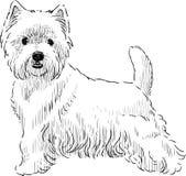 Scottish terrier sketch Royalty Free Stock Photos