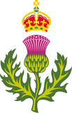 Scottish thistle Stock Images