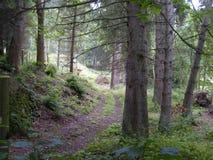 Scottish Woodland Royalty Free Stock Photo