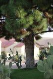 Scottsdale als Vorstadt-ranchland, die Stadt ist ein sportlicher dennoch entspannter Erholungsortbestimmungsort geworden, der für lizenzfreies stockbild