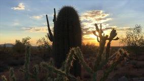 Scottsdale Arizona desert sunset. Beautiful Scottsdale Arizona desert sunset video footage stock video