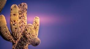 Scottsdale Arizona, golfbollar i kaktusträd Arkivfoton