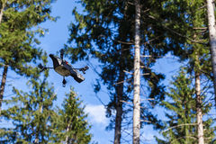 Scout drone in the forest Stock Image