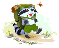 Scout raccoon with backpack goes camping. Summer Camping Royalty Free Stock Image