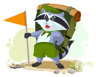 Scout raccoon with backpack goes camping. Summer Camping Stock Image
