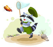 Scout raccoon butterfly catches. Entomologist with butterfly net. Summer leisure Royalty Free Stock Photography