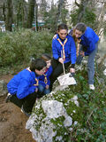 Scouts learn orientation. A group of people (teenagers and one adult - best friends) in scout uniforms have classes in nature. Scouts learn how to orient with a stock images