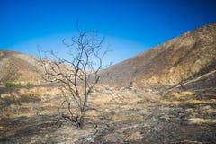 Scraggly Nieżywy drzewo w pustkowiu Obraz Royalty Free