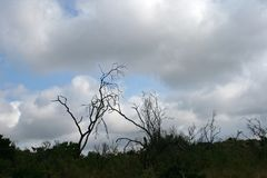 SCRAGLY反对多云天空的黑色分支 库存图片