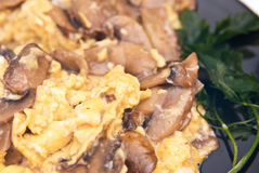 Scrambled eggs with mushrooms Royalty Free Stock Photography