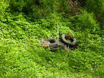Scrap tyres in the nature Royalty Free Stock Images