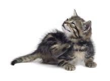 Scraping cute kitten Stock Photo