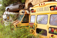 Scrapped School Buses Sit In Auto Junkyard Stock Photo