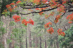 Scrappy red flower tree Royalty Free Stock Photo