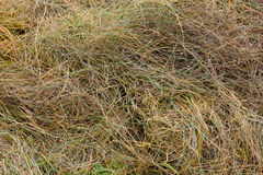 Scraps of hay in a field Royalty Free Stock Image