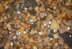 Scraps of paper and wet fallen leaves. Natural background Royalty Free Stock Image