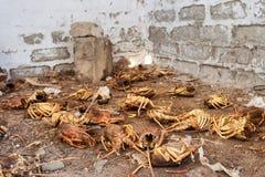 Scrapyard av olagligt fångade hummer arkivfoton