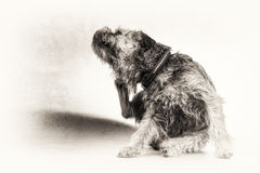 Scratch, scratching, dog, terrier, paw, black, white, copy space stock photos