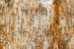 Scratched and dirty surface of a sheet of birch plywood. Natural wood texture. Abstract background Royalty Free Stock Photos