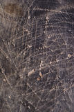 Scratched leather Stock Images