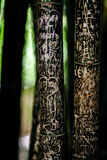 Scratches on bamboo trees. Handmade inscription on a bamboo tree Stock Photography