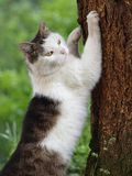 Scratching cat. A cat scratching a tree (trunk) royalty free stock photography