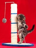 Scratching post Stock Photography