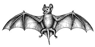 Screaming bat Stock Images